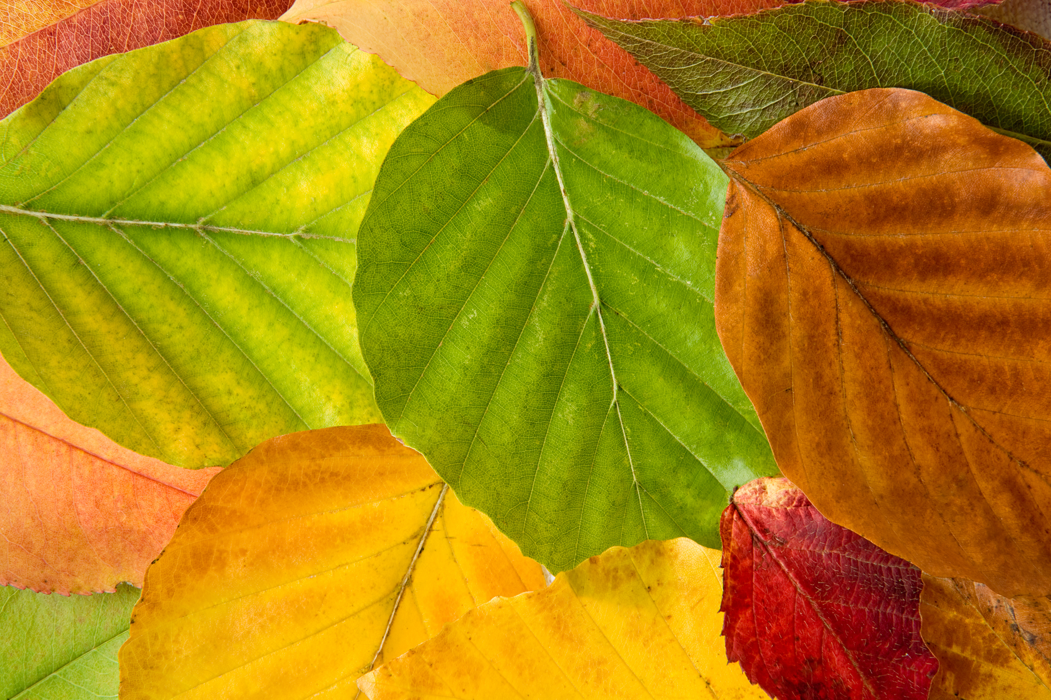 Variety_of_Leaves
