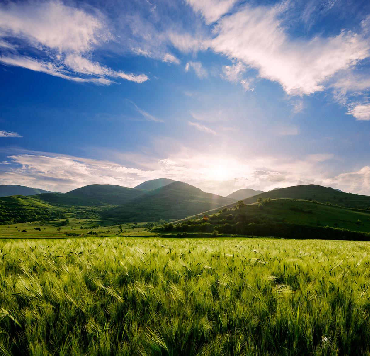 Barley-field-and-hills-in-the-sunset