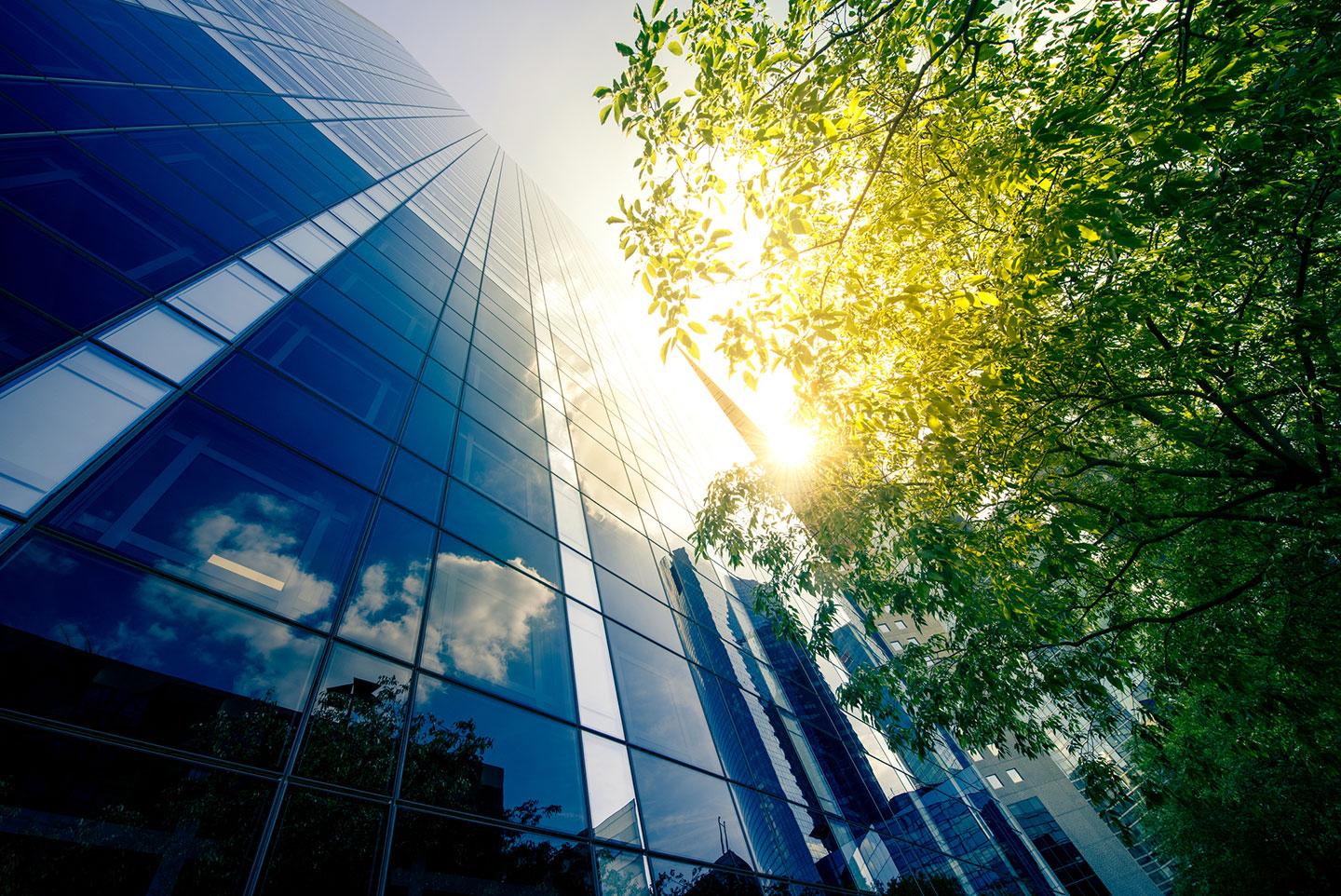 Office-skyscraper-with-tree-in-the-sun
