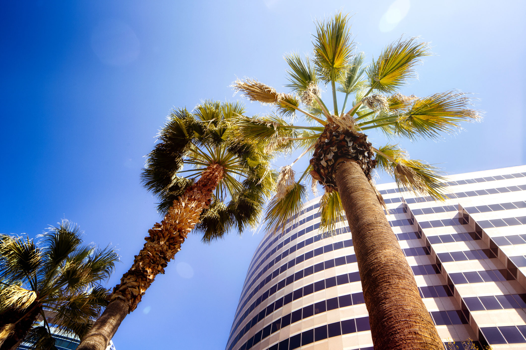Office-tower-with-palm-trees