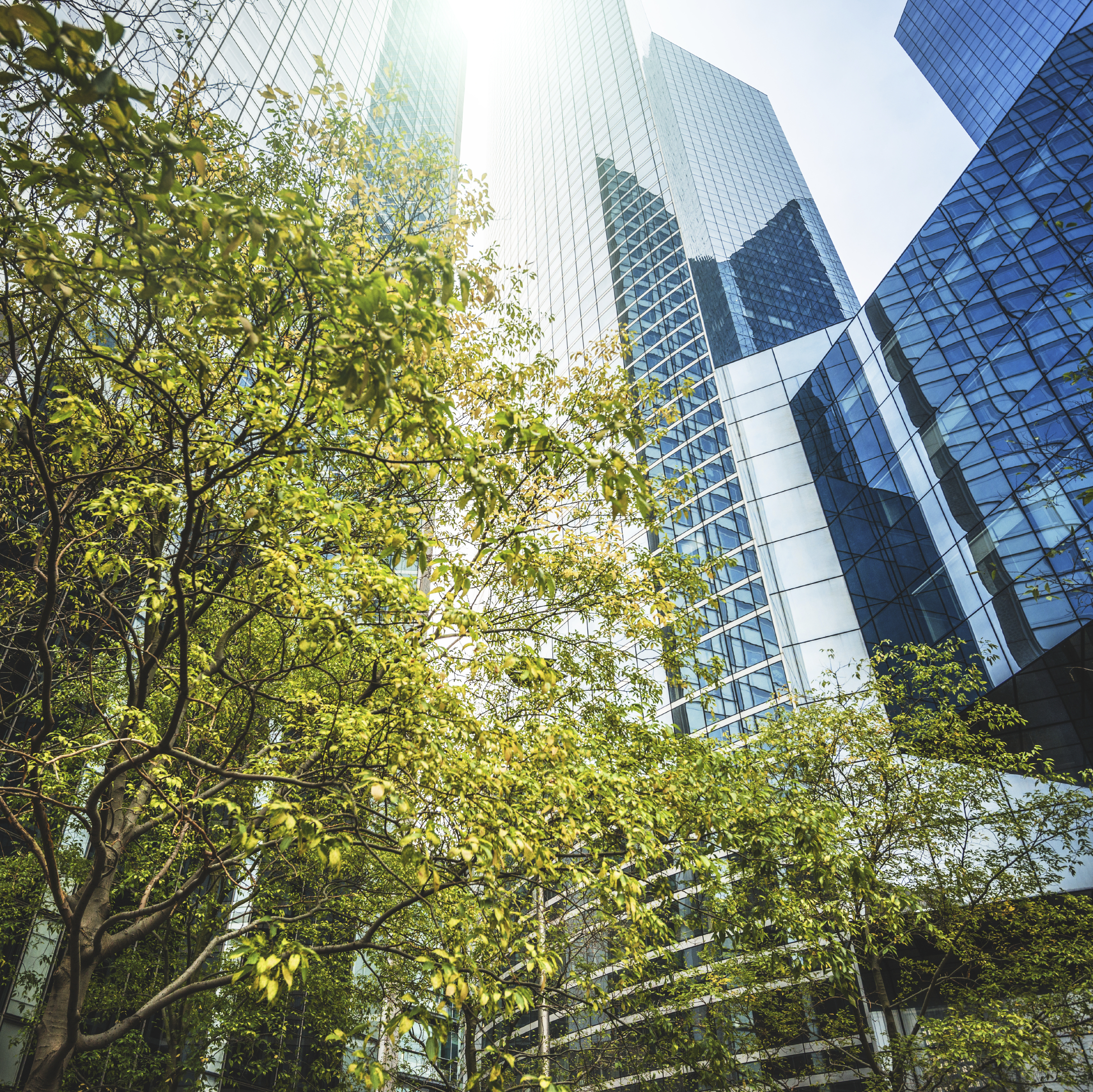Office_Building_Exterior_with_Trees