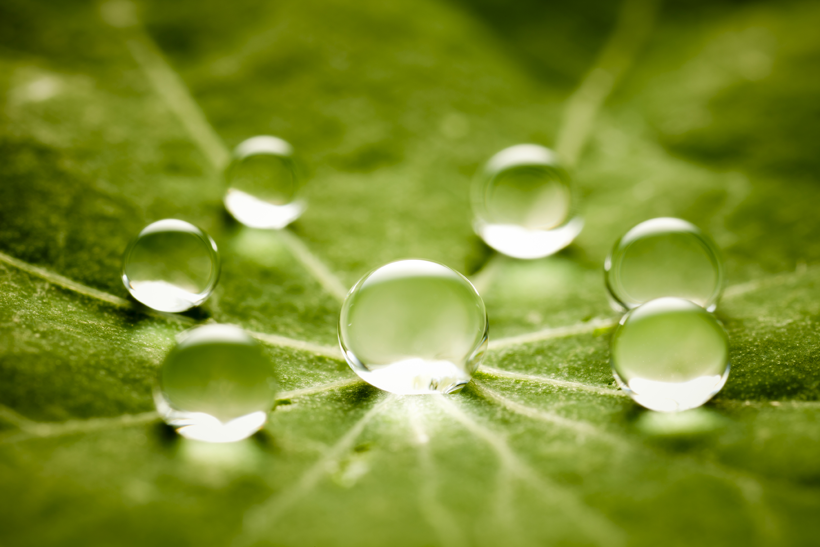 dew_drops_on_leaf
