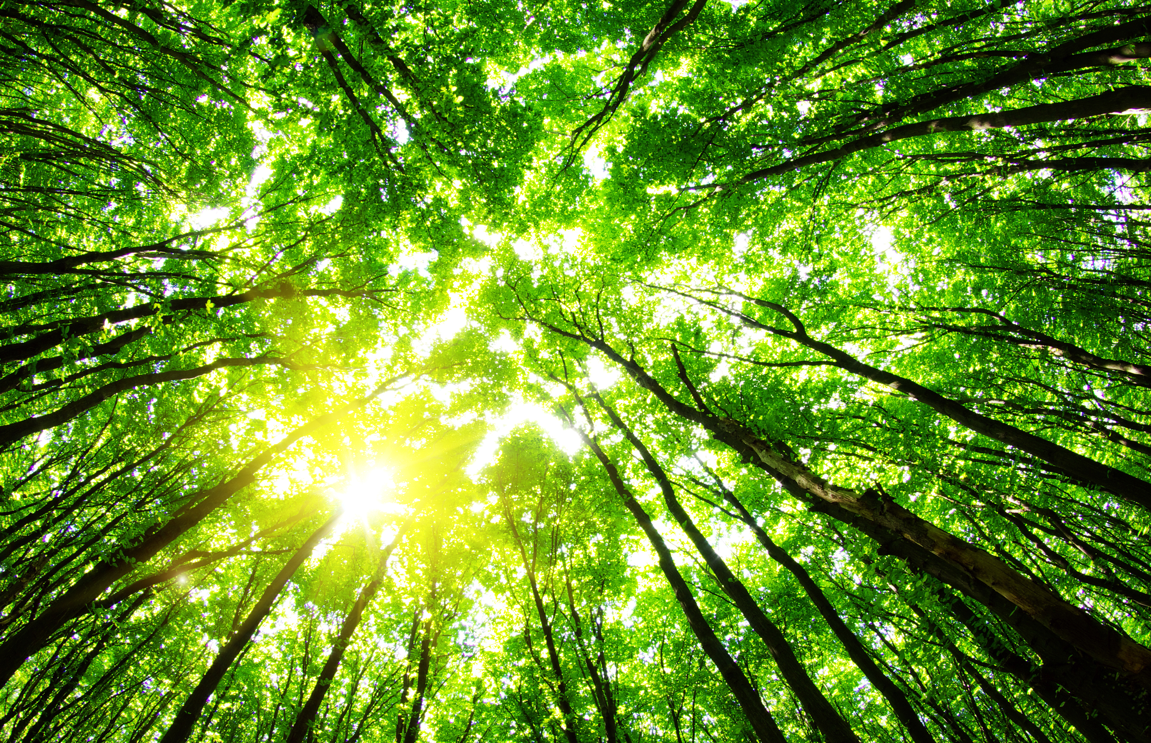 green_forest_background_in_a_sunny_day