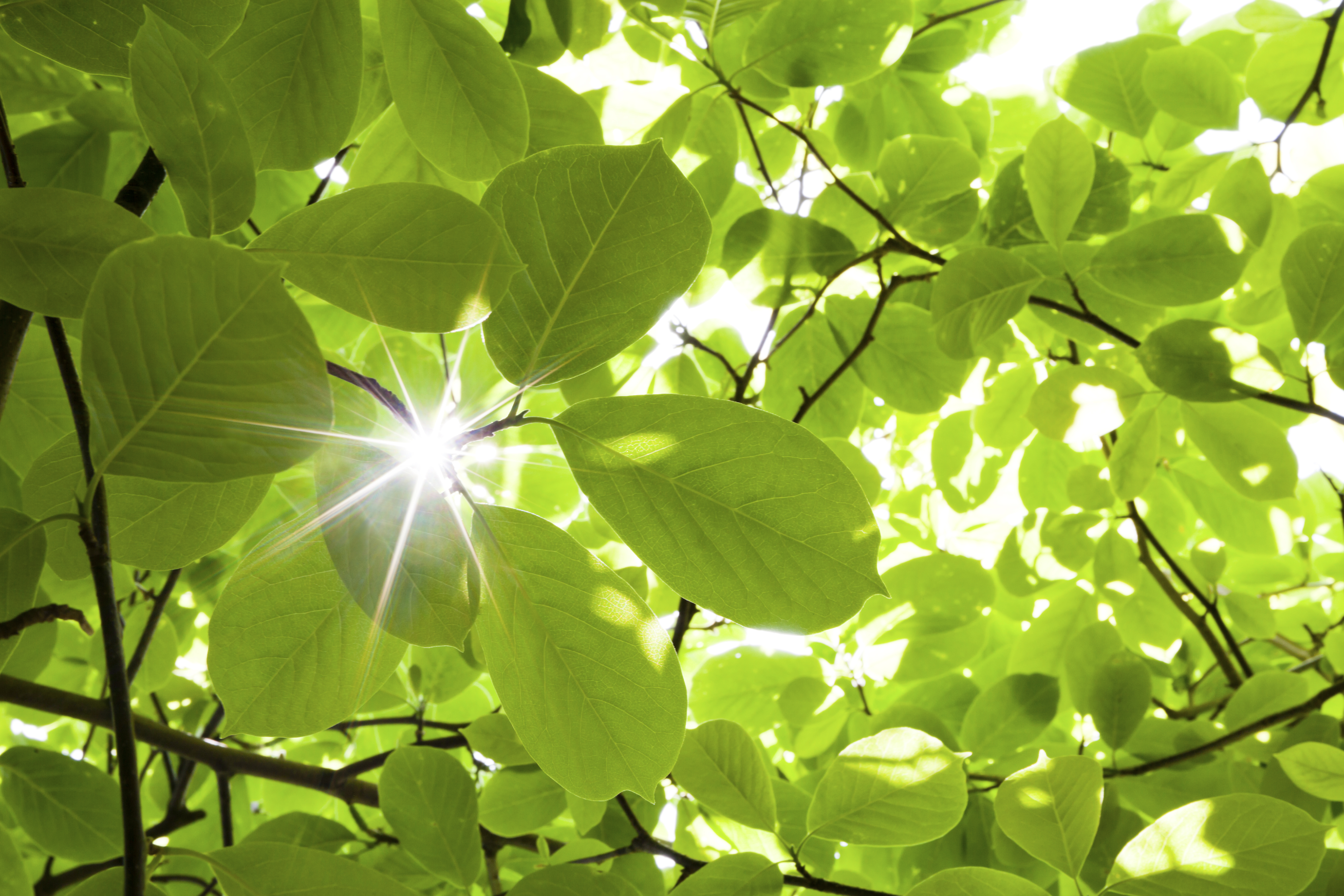 light_ray_through_forest_plants